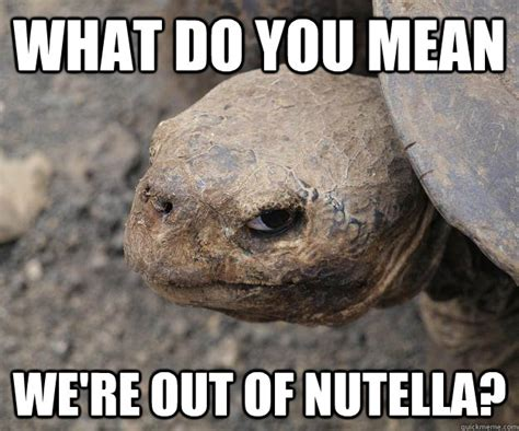 Nutella Meme - what do you mean we re out of nutella murderturtle nutella quickmeme