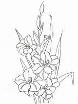 Coloring Gladiolus Flower Flowers Printable Colors Recommended sketch template