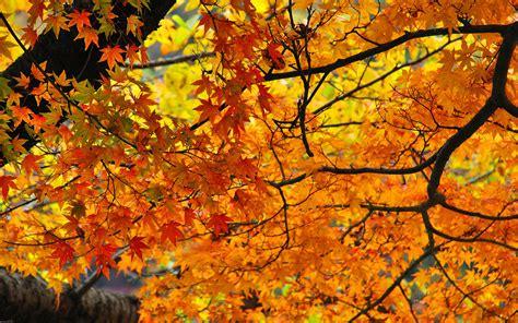fall ever foliage autumn york leaves way meditation state zoom activities seasonal leisure go change ways travel major travelandleisure trip