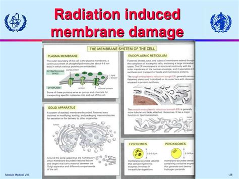 Biological Effects Of Ionizing Radiation At