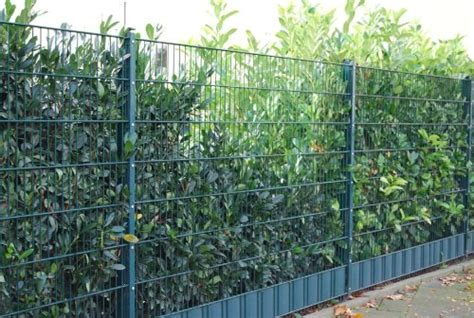 Zaunelemente Metall Grün by Gartenzaun Doppelstabmattenzaun Preisvergleiche