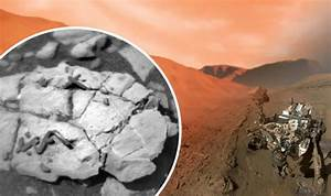LIFE ON MARS: NASA rover finds 'unique fossils' on Red ...