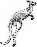 Kangaroo Drawing Pages Coloring Animals Clipart Jumping Printable Cliparts Getdrawings Clipartmag Library sketch template