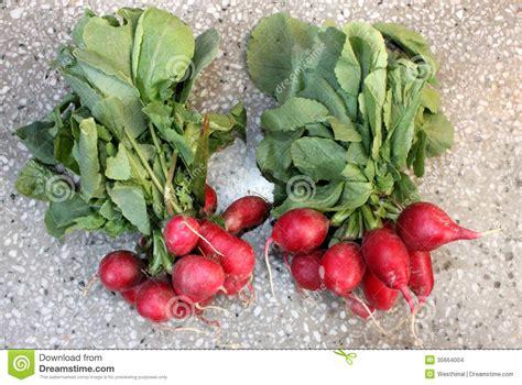 tiny vegetables small red radish european radish stock photo image 35664004