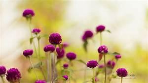 purple garden flowers wallpapers hd wallpapers id 12298