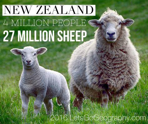 sheep zealand