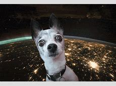 Dog Space GIF Find & Share on GIPHY