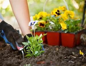 Planting 101 Understanding The Basics Of Growing A Garden