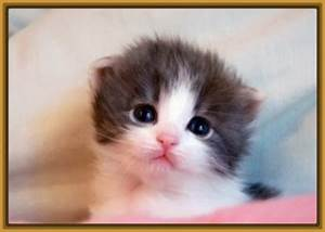 imagenes de gatitos tiernos bebes Archivos Gatitos Tiernos