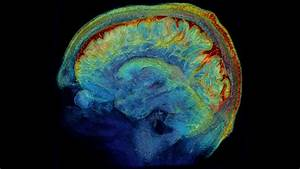 The Brain  In Exquisite Detail