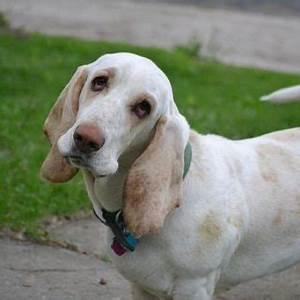 Hund Würmer Hausmittel : ohrenentz ndung hund hausmittel l hausmittelhexe ~ Frokenaadalensverden.com Haus und Dekorationen