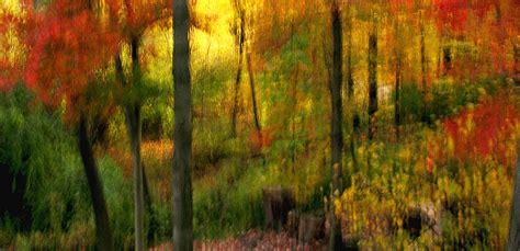 impressionistic photo   woods