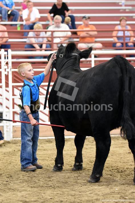 nebraska state fair junior breeding heifer show candids