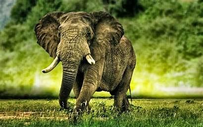 African Wallpapers Elephants Elephant