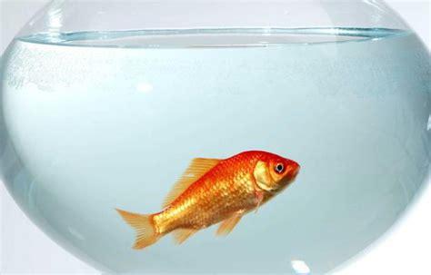 les 171 boules aquariums 187 une prison pour les poissons rouges