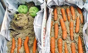 Gemüse Richtig Lagern : gem se lagern gem se optimal lagern frag mutti obst und ~ Whattoseeinmadrid.com Haus und Dekorationen