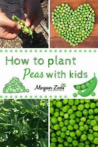 How To Plant Peas With Kids