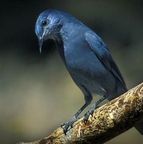 Bird Fe by Report 50 New Mexico Bird Species Will Lose Habitat As