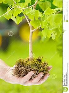 Baum Mit H : baum mit wurzeln archivbilder abgabe des download 10 212 geben fotos frei ~ A.2002-acura-tl-radio.info Haus und Dekorationen