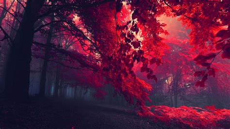 Backgrounds Laptop by Trippy Forest Wallpaper 56 Images