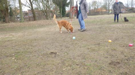 maerz hundeschulbrief familienhund akademies webseite