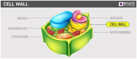 cell wall  cell membrane structure functions