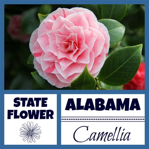 alabama facts nickname  yellowhammer state  usa facts