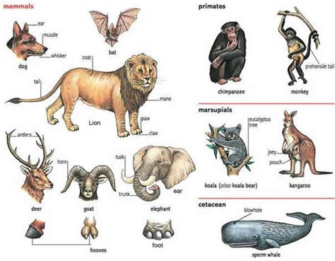 3 letter mammals animals and their names and parts learning 28571