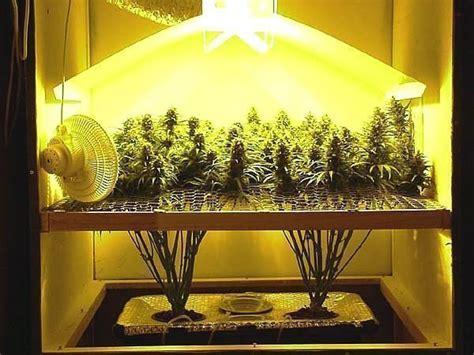 chambre culture cannabis le quot oui quot massif au cannabis inquiète l 39 onu openminded