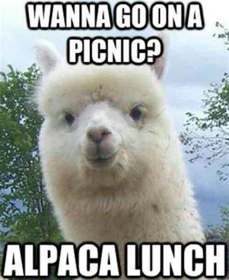 Llama Memes - 21 funny llama memes if you don t need no drama