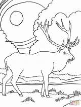 Elk Coloring Pages Mountain Printable Rocky Scenery Mountains Drawing Deer Bull Adult Supercoloring Coloringhome Drawn Template Simple Sheets Animal Getdrawings sketch template