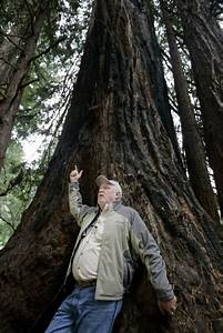 Conservationists Successfully Clone Five Massive Redwood Trees – 75 Times…