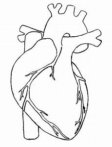 Real Heart Drawing | Clipart Panda - Free Clipart Images