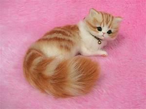 Needle Felted Cute Fluffy Kitten, Orange Tabby: Miniature ...