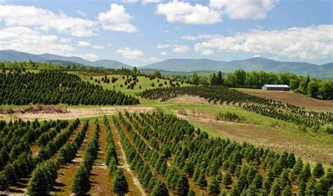 about us weir tree farms colebrook new hshire