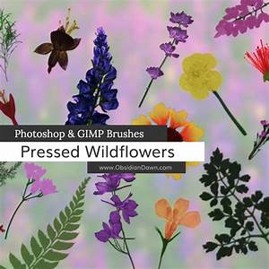 pressed wildflowers photoshop gimp brushes obsidian
