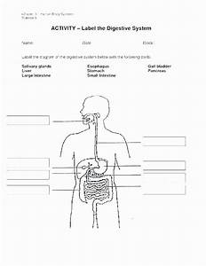 Digestive System Worksheets Middle School Human Body