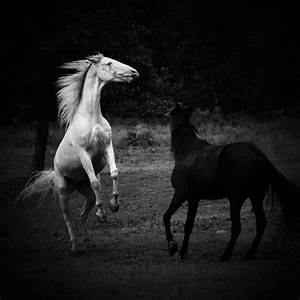black and white horse photography / horse / by ...