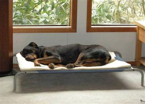 coolaroo bed large coolaroo bed for your most loved pet canineplanet net