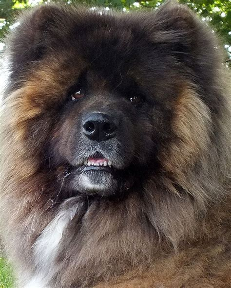 17 best images about best dogs on pinterest akita dog