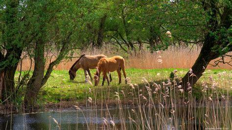 landscapes animals grass horses junk lakes land