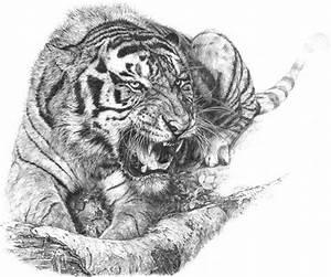 100 desenhos de tigres | Aido Bonsai