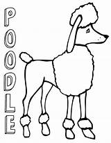 Poodle Coloring Pages Print sketch template