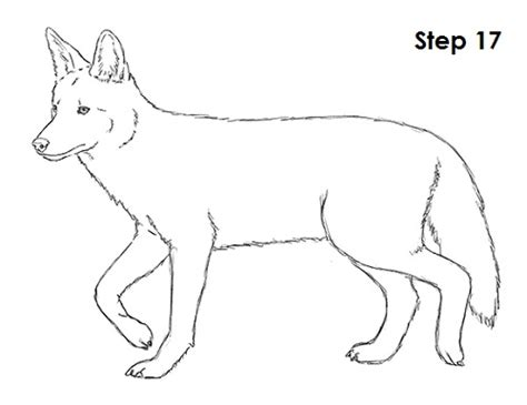 draw  coyote video step  step pictures