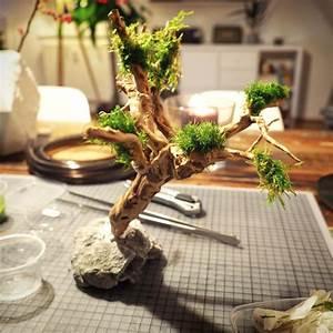 Bonsai Stecklinge Machen : bonsai baum f rs nano aquarium selber machen ~ Indierocktalk.com Haus und Dekorationen