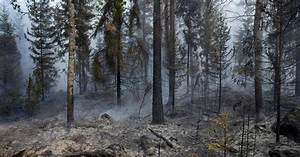 Trump Says California Can Learn From Finland on Fires. Is ...
