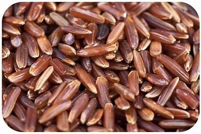 Organic Rice Bio Foods