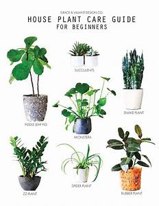 House Plant Care For Beginners