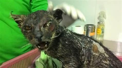 phoenix  cat   abandoned   burned