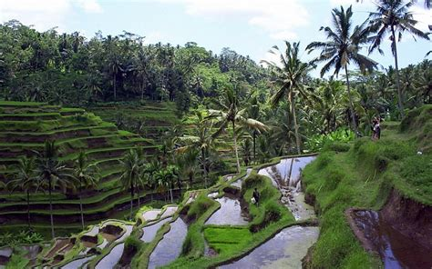 bali package  days  nights  board atom travel